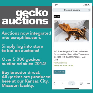 Gecko Auctions