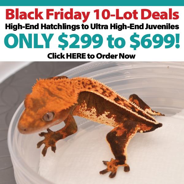 Black Friday Week Wholesale 10-Lot Deals